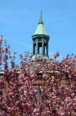 stock photo of asheville  - First Baptist Church in downtown Asheville North Carolina is a landmark with its copper steeple and roof - JPG