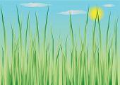 Vector Illustration Of Herbal Background poster