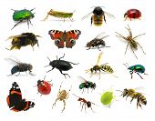 foto of hornets  - Set of insects on white - JPG