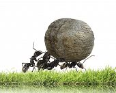 foto of ant  - teamwork  - JPG