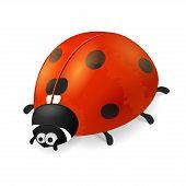 pic of ladybug  - Ladybird on white background - JPG