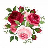 image of english rose  - Vector red and pink English roses and rose buds isolated on a white background - JPG