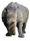 picture of rhino  - Rhino isolated over white - JPG
