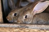foto of rabbit hutch  - Young rabbit animal farm and breeding. Whole background.