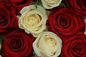 stock photo of centerpiece  - Red and whte roses in a wedding centerpiece - JPG