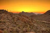 image of ocotillo  - sonoran desert just before dawn - JPG