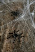 picture of cobweb  - Cobweb with spiders on wooden background - JPG