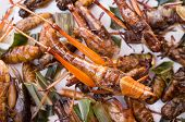 stock photo of grub  - Crispy fried insects grub larvae Grasshopper CRICKET - JPG