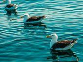 stock photo of water animal  - Animals nature - JPG