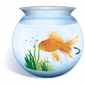 picture of fishbowl  - Close - JPG