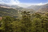 picture of himachal pradesh  - Trees on mountains - JPG