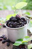 picture of mulberry  - fresh mulberries in an old metal mug - JPG