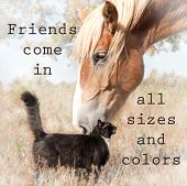 foto of snuggle  - Friends come in all sizes and colors  - JPG