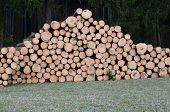 image of bohemia  - felled trees ready for transportation South Bohemia Czech Republic - JPG