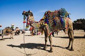 stock photo of camel-cart  - Decorated camel in Pushkar Camel Fair - JPG
