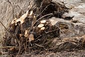 image of decomposition  - Dark brown bushed log with all his branches cut down - JPG