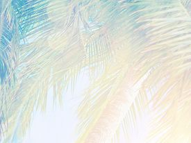 foto of green-blue  - Beautiful tropical vintage background - JPG