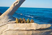 Assorted cannabis buds against ocean and blue sky - medical marijuana concept poster