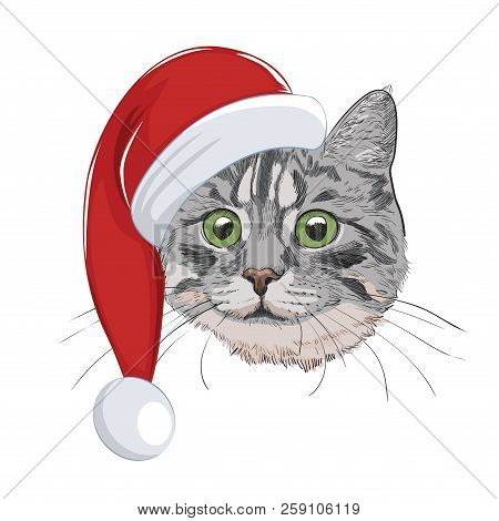 poster of Cat With Christmas Hat Isolated On White Background. Cute Cat Face Wearing Santa Hat. Green-eyed Gre