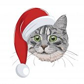 Cat With Christmas Hat Isolated On White Background. Cute Cat Face Wearing Santa Hat. Green-eyed Gre poster