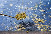 Abstract Cleaning Swimming Pond In The Park From Fallen Leaves With Special Mesh, Skimmer, Autumn. C poster