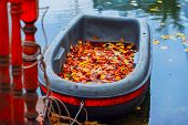 Bright Autumn Scene, Dirty Boat In The Autumn Pond, Fallen Vivid Leaves On The Shore, Picturesque Co poster