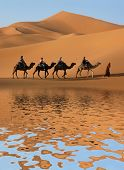 stock photo of saharan  - Camel caravan going along the lake the Sahara Desert - JPG