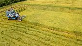 Rice Farm On Harvesting Season By Farmer With Combine Harvesters And Tractor On Rice Field Plantatio poster