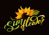 Sunflower Vector Clip Art With Hand Lettering Sign Calligraphy Flower Name Yellow Autumn Botany Illu poster