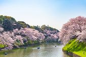 Cherry Blossoms Around Chidorigafuchi Park, Tokyo, Japan.  The Northernmost Part Of Edo Castle Is No poster