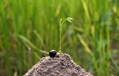 Plant Growing In Soil On Idea Growing Concept poster