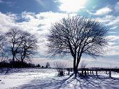 pic of winter trees  - trees and snow on cold winter day - JPG