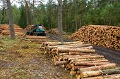 Tractor works in forest with lumbers, first part of timber business