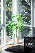 Decoration Of The Apartments. A Plant In A Modern Apartment. poster