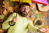 Fall Atmosphere Attributes. Man Bearded Lay On Wooden Background With Leaves Top View. Hipster With  poster