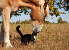 picture of gentle giant  - Friends come in all sizes and colors  - JPG