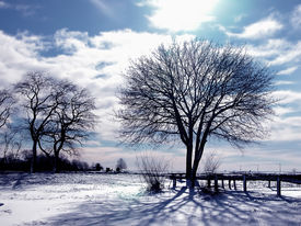 picture of winter trees  - trees and snow on cold winter day - JPG