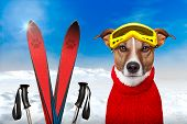 picture of pullovers  - winter dog ski snow sky and mountain - JPG