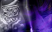 pic of excretory  - Digital illustration of a female human digestive system - JPG