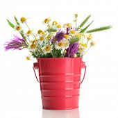 Beautiful wild flowers in  pail, isolated on white