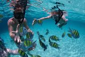 stock photo of school fish  - Young friends having fun in a tropical sea - JPG