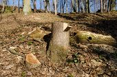 foto of deforestation  - cut tree trunk stump with paint mark on it - JPG