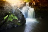 picture of fern  - Beautiful waterfall on a mountain river with fern and light coming from top - JPG