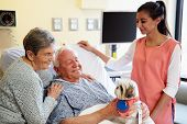 stock photo of working animal  - Pet Therapy Dog Visiting Senior Male Patient In Hospital - JPG