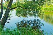 stock photo of bent over  - willow tree bent over the picturesque lake water - JPG