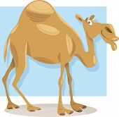pic of dromedaries  - Cartoon Illustration of Funny Dromedary Camel Animal - JPG