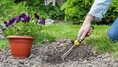 picture of manicured lawn  - Preparing to plant flowers in the garden - JPG