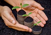 stock photo of sustainable development  - hands holding trees growing on coins / csr / sustainable development / economic growth / trees growing on stack of coins