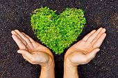 picture of environmentally friendly  - hands holding green heart shaped tree  - JPG