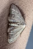 stock photo of moth  - extreme macro shot of a small moth sitting on fabric - JPG